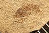 http://mczbase.mcz.harvard.edu/specimen_images/entomology/paleo/large/PALE-22683_Pterygota.jpg