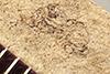 http://mczbase.mcz.harvard.edu/specimen_images/entomology/paleo/large/PALE-22699_Pterygota.jpg