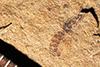 http://mczbase.mcz.harvard.edu/specimen_images/entomology/paleo/large/PALE-22703_Formicidae_qm.jpg
