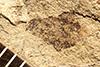 http://mczbase.mcz.harvard.edu/specimen_images/entomology/paleo/large/PALE-22711_Coleoptera.jpg