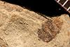 http://mczbase.mcz.harvard.edu/specimen_images/entomology/paleo/large/PALE-22712_Coleoptera.jpg