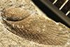 http://mczbase.mcz.harvard.edu/specimen_images/entomology/paleo/large/PALE-227a_Neorthroblattina_rotundata_type.jpg
