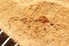 http://mczbase.mcz.harvard.edu/specimen_images/entomology/paleo/large/PALE-2307_Ichneumonoidea.jpg