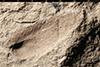 http://mczbase.mcz.harvard.edu/specimen_images/entomology/paleo/large/PALE-235_Scutinoblattina_recta_syntype_2.jpg