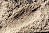 http://mczbase.mcz.harvard.edu/specimen_images/entomology/paleo/large/PALE-236a_Scutinoblattina_recta_syntype_2.jpg