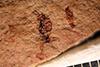 http://mczbase.mcz.harvard.edu/specimen_images/entomology/paleo/large/PALE-2385_Ichneumonidae.jpg