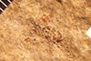 http://mczbase.mcz.harvard.edu/specimen_images/entomology/paleo/large/PALE-2414_Cryptinae.jpg
