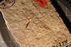 http://mczbase.mcz.harvard.edu/specimen_images/entomology/paleo/large/PALE-254_Ephemera_pumicosa_type_1.jpg
