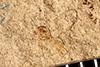 http://mczbase.mcz.harvard.edu/specimen_images/entomology/paleo/large/PALE-25952_Nematocera.jpg