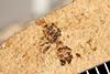http://mczbase.mcz.harvard.edu/specimen_images/entomology/paleo/large/PALE-25975_Formicidae.jpg