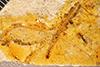 http://mczbase.mcz.harvard.edu/specimen_images/entomology/paleo/large/PALE-26593_Palaeochrysa_stricta.jpg