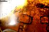 http://mczbase.mcz.harvard.edu/specimen_images/entomology/paleo/large/PALE-26610_Acari_1.jpg