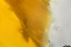 http://mczbase.mcz.harvard.edu/specimen_images/entomology/paleo/large/PALE-26614_syn1_Apocrita.jpg