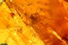 http://mczbase.mcz.harvard.edu/specimen_images/entomology/paleo/large/PALE-26639_syn1_Chironomidae.jpg
