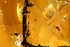 http://mczbase.mcz.harvard.edu/specimen_images/entomology/paleo/large/PALE-26658_Arthropoda_1.jpg