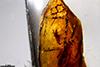 http://mczbase.mcz.harvard.edu/specimen_images/entomology/paleo/large/PALE-26658_Arthropoda_2.jpg