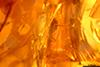 http://mczbase.mcz.harvard.edu/specimen_images/entomology/paleo/large/PALE-26660_Nematocera_qm.jpg