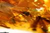 http://mczbase.mcz.harvard.edu/specimen_images/entomology/paleo/large/PALE-26662_Pterygota.jpg
