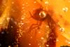 http://mczbase.mcz.harvard.edu/specimen_images/entomology/paleo/large/PALE-26681_Pterygota.jpg