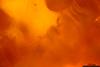 http://mczbase.mcz.harvard.edu/specimen_images/entomology/paleo/large/PALE-26699_Apocrita.jpg
