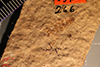 http://mczbase.mcz.harvard.edu/specimen_images/entomology/paleo/large/PALE-266_Parotermes_hagenii_holotype.jpg