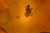 http://mczbase.mcz.harvard.edu/specimen_images/entomology/paleo/large/PALE-26704_Arthropoda.jpg