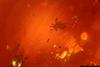 http://mczbase.mcz.harvard.edu/specimen_images/entomology/paleo/large/PALE-26705_Acari.jpg