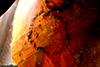 http://mczbase.mcz.harvard.edu/specimen_images/entomology/paleo/large/PALE-26706_Cecidomyiidae_qm_1.jpg