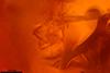 http://mczbase.mcz.harvard.edu/specimen_images/entomology/paleo/large/PALE-26719_Arthropoda.jpg