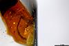 http://mczbase.mcz.harvard.edu/specimen_images/entomology/paleo/large/PALE-26724_Pterygota_2.jpg