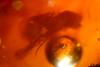 http://mczbase.mcz.harvard.edu/specimen_images/entomology/paleo/large/PALE-26724_syn2_Diptera.jpg