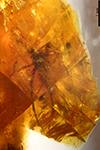 http://mczbase.mcz.harvard.edu/specimen_images/entomology/paleo/large/PALE-26762_Araneae.jpg