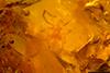 http://mczbase.mcz.harvard.edu/specimen_images/entomology/paleo/large/PALE-26769_syn1_Acari_qm.jpg