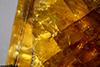 http://mczbase.mcz.harvard.edu/specimen_images/entomology/paleo/large/PALE-26775_Arthropoda_2.jpg