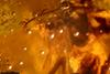http://mczbase.mcz.harvard.edu/specimen_images/entomology/paleo/large/PALE-26775_syn2_Pterygota.jpg