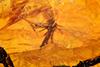 http://mczbase.mcz.harvard.edu/specimen_images/entomology/paleo/large/PALE-26783_Chironomidae.jpg
