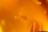 http://mczbase.mcz.harvard.edu/specimen_images/entomology/paleo/large/PALE-26849_syn1_Acari.jpg