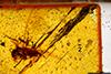 http://mczbase.mcz.harvard.edu/specimen_images/entomology/paleo/large/PALE-26851_Isoptera.jpg