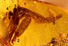 http://mczbase.mcz.harvard.edu/specimen_images/entomology/paleo/large/PALE-26853_Apocrita_1.jpg