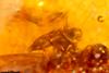 http://mczbase.mcz.harvard.edu/specimen_images/entomology/paleo/large/PALE-26853_syn4_Formicidae.jpg