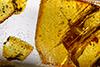 http://mczbase.mcz.harvard.edu/specimen_images/entomology/paleo/large/PALE-26854_Isoptera.jpg