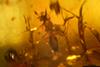 http://mczbase.mcz.harvard.edu/specimen_images/entomology/paleo/large/PALE-26856_syn2_Apocrita.jpg