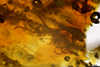 http://mczbase.mcz.harvard.edu/specimen_images/entomology/paleo/large/PALE-26857_syn5_Diptera.jpg