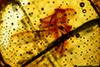 http://mczbase.mcz.harvard.edu/specimen_images/entomology/paleo/large/PALE-26862_Isoptera.jpg