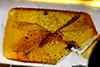 http://mczbase.mcz.harvard.edu/specimen_images/entomology/paleo/large/PALE-26863_Isoptera.jpg