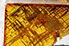 http://mczbase.mcz.harvard.edu/specimen_images/entomology/paleo/large/PALE-26864_Evaniidae_qm.jpg