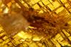 http://mczbase.mcz.harvard.edu/specimen_images/entomology/paleo/large/PALE-26864_syn2_Pterygota.jpg