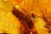 http://mczbase.mcz.harvard.edu/specimen_images/entomology/paleo/large/PALE-26865_Isoptera.jpg