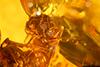 http://mczbase.mcz.harvard.edu/specimen_images/entomology/paleo/large/PALE-26868_syn3_Isoptera.jpg
