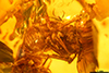 http://mczbase.mcz.harvard.edu/specimen_images/entomology/paleo/large/PALE-26868_syn4_Pterygota.jpg